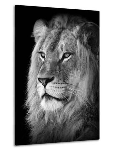 Portrait Of A Lion In Black And White-Reinhold Leitner-Metal Print
