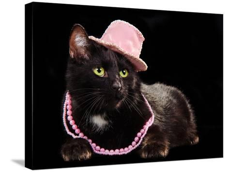 Glamorous Black Cat Wearing Pink Hat And Beads Against Black Background-vitalytitov-Stretched Canvas Print