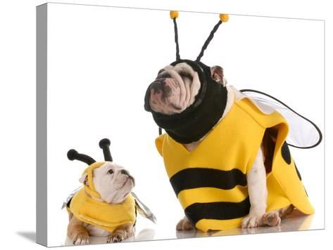 Bulldog Bee Mother And Daughter-Willee Cole-Stretched Canvas Print