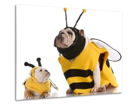 Bulldog Bee Mother And Daughter-Willee Cole-Metal Print
