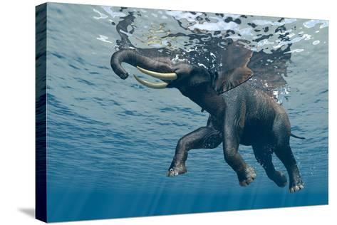 An Elephant Swims Through The Water-1971yes-Stretched Canvas Print