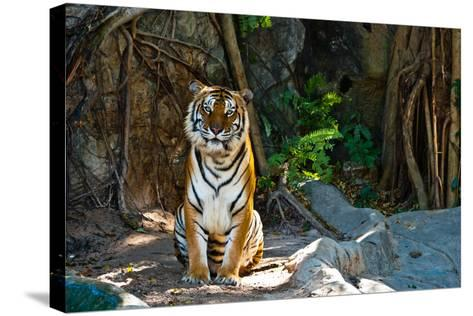 Female Wild Tiger From Thailand-sasilsolutions-Stretched Canvas Print