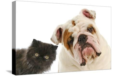 Dog And Cat-Willee Cole-Stretched Canvas Print