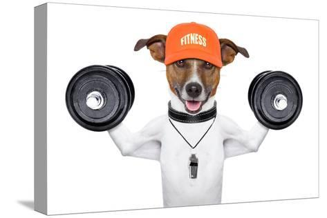 Fitness Dog-Javier Brosch-Stretched Canvas Print