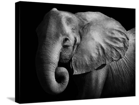 Elephant-Donvanstaden-Stretched Canvas Print