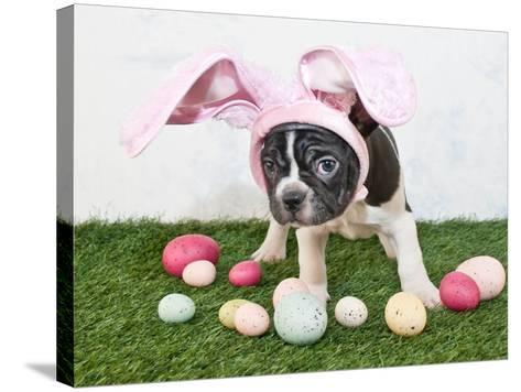 Easter Bunny Puppy- JStaley401-Stretched Canvas Print