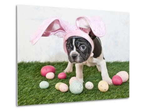 Easter Bunny Puppy- JStaley401-Metal Print
