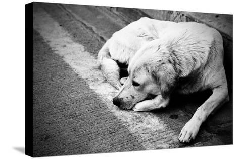 Homeless Stray Dog-Zoom-zoom-Stretched Canvas Print