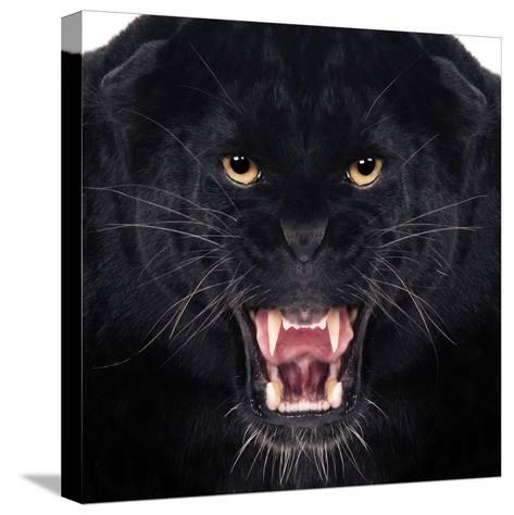 Black Leopard-Andrew Blue-Stretched Canvas Print