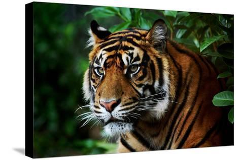 Tiger-Nanieke-Stretched Canvas Print