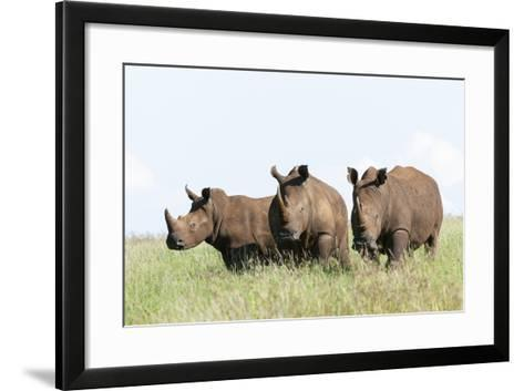 White Rhinoceros, Kenya-Martin Zwick-Framed Art Print