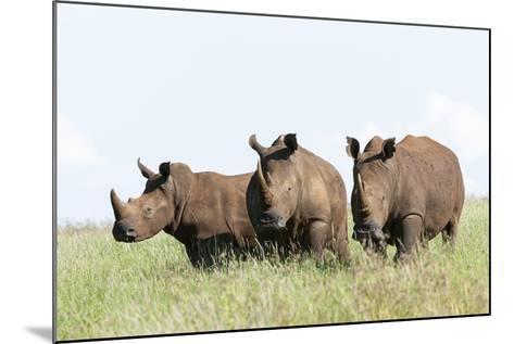 White Rhinoceros, Kenya-Martin Zwick-Mounted Photographic Print