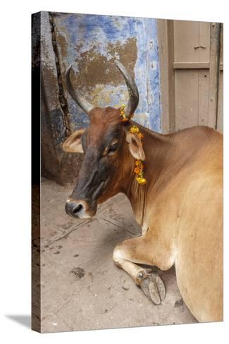Cow with Flowers, Varanasi, India-Ali Kabas-Stretched Canvas Print