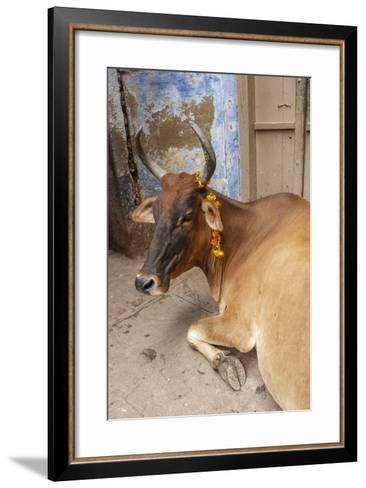 Cow with Flowers, Varanasi, India-Ali Kabas-Framed Art Print