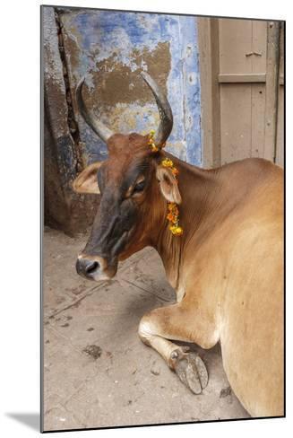 Cow with Flowers, Varanasi, India-Ali Kabas-Mounted Photographic Print