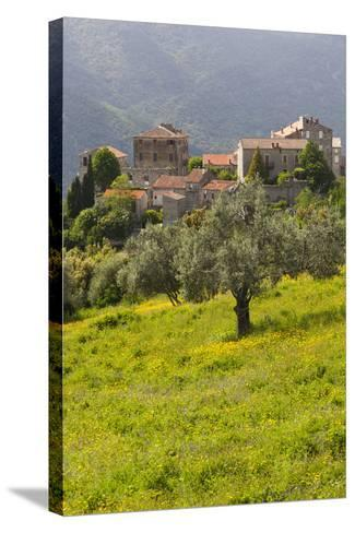 Olive Groves, Ste-Lucie De Tallano, Corsica, France-Walter Bibikow-Stretched Canvas Print