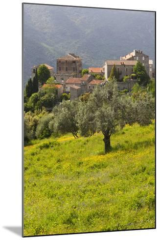 Olive Groves, Ste-Lucie De Tallano, Corsica, France-Walter Bibikow-Mounted Photographic Print