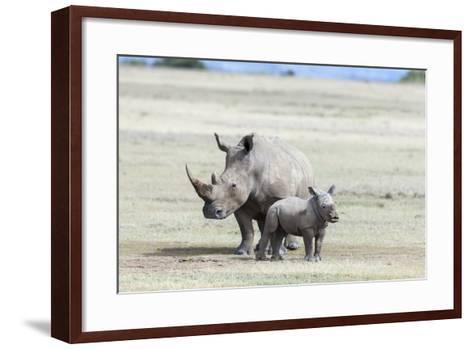 White Rhinoceros Mother with Calf, Kenya-Martin Zwick-Framed Art Print