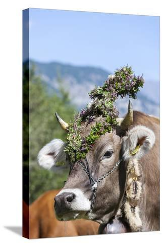Cow Decorated with Flowers and Ceremonial Bells, South Tyrol, Italy-Martin Zwick-Stretched Canvas Print