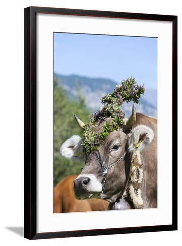 Cow Decorated with Flowers and Ceremonial Bells, South Tyrol, Italy-Martin Zwick-Framed Art Print