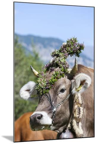 Cow Decorated with Flowers and Ceremonial Bells, South Tyrol, Italy-Martin Zwick-Mounted Photographic Print