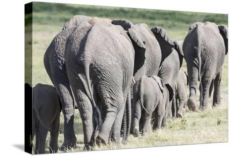 African Bush Elephant Herd, Amboseli National Park, Kenya-Martin Zwick-Stretched Canvas Print