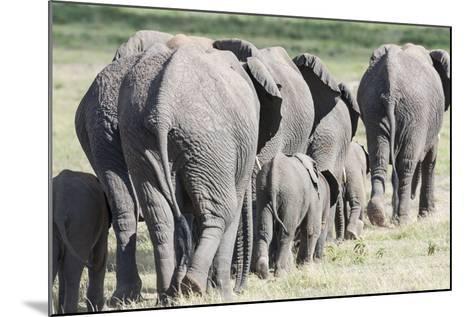 African Bush Elephant Herd, Amboseli National Park, Kenya-Martin Zwick-Mounted Photographic Print
