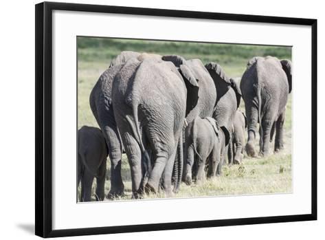African Bush Elephant Herd, Amboseli National Park, Kenya-Martin Zwick-Framed Art Print