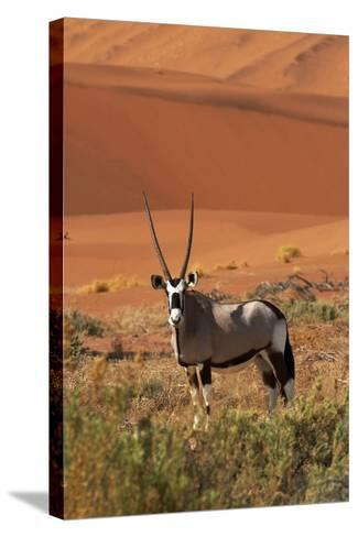 Gemsbok and Sand Dunes, Namib-Naukluft National Park, Namibia-David Wall-Stretched Canvas Print