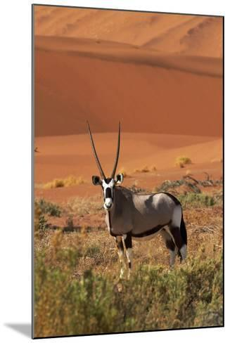 Gemsbok and Sand Dunes, Namib-Naukluft National Park, Namibia-David Wall-Mounted Photographic Print
