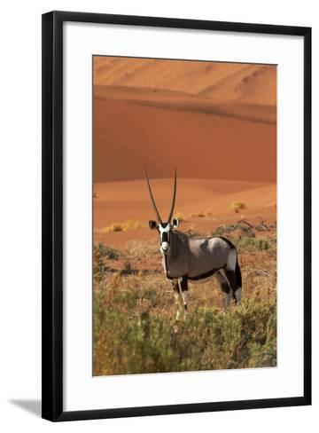 Gemsbok and Sand Dunes, Namib-Naukluft National Park, Namibia-David Wall-Framed Art Print