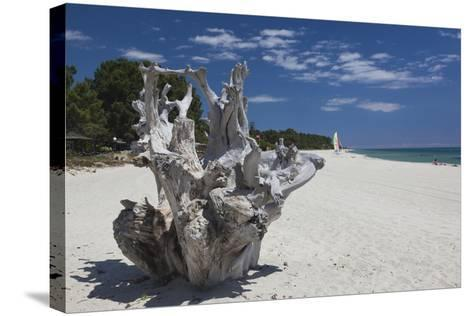Town Beach Driftwood, Ghisonaccia, Costa Derena, Corsica, France-Walter Bibikow-Stretched Canvas Print