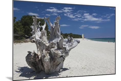 Town Beach Driftwood, Ghisonaccia, Costa Derena, Corsica, France-Walter Bibikow-Mounted Photographic Print