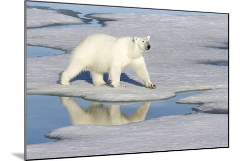 Polar Bear Reflected in Pool as it Walks across Ice, Svalbard, Norway-Jaynes Gallery-Mounted Photographic Print