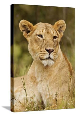 Lioness Up Close, Maasai Mara Wildlife Reserve, Kenya-Jagdeep Rajput-Stretched Canvas Print