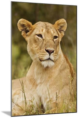 Lioness Up Close, Maasai Mara Wildlife Reserve, Kenya-Jagdeep Rajput-Mounted Photographic Print