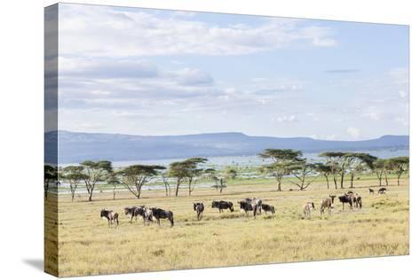 Lake Naivasha and Crescent Island Game Park, Naivasha, Kenya-Martin Zwick-Stretched Canvas Print