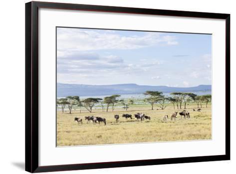 Lake Naivasha and Crescent Island Game Park, Naivasha, Kenya-Martin Zwick-Framed Art Print