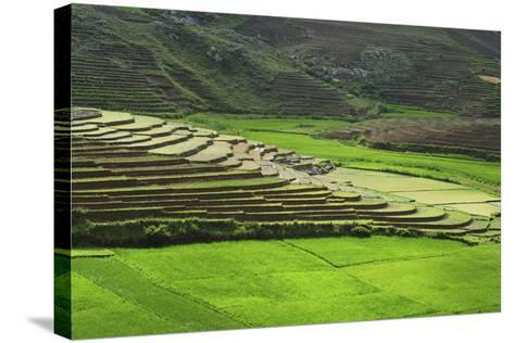 Spectacular Green Rice Field in Rainy Season, Ambalavao, Madagascar-Anthony Asael-Stretched Canvas Print
