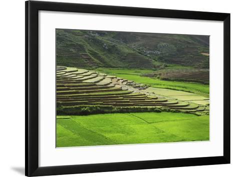 Spectacular Green Rice Field in Rainy Season, Ambalavao, Madagascar-Anthony Asael-Framed Art Print