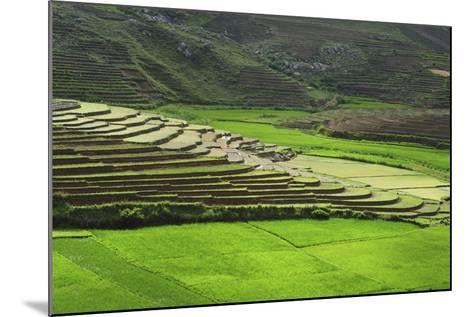 Spectacular Green Rice Field in Rainy Season, Ambalavao, Madagascar-Anthony Asael-Mounted Photographic Print