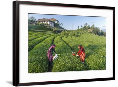 Girls Collecting Tea in Field in Rize, Black Sea Region of Turkey-Ali Kabas-Framed Art Print