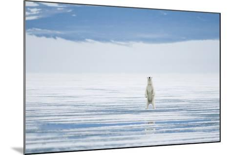 Polar Bear Travels Along Sea Ice, Spitsbergen, Svalbard, Norway-Steve Kazlowski-Mounted Photographic Print
