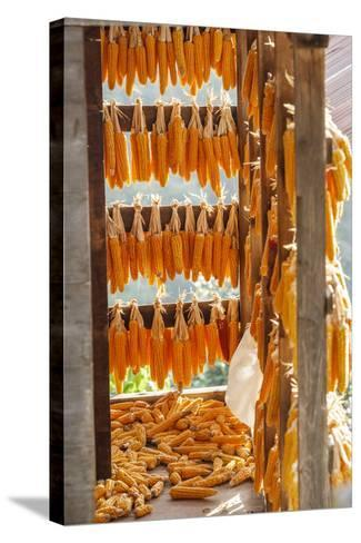 Corn Hung to Dry, Rize, Black Sea Region of Turkey-Ali Kabas-Stretched Canvas Print