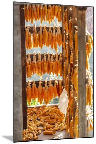 Corn Hung to Dry, Rize, Black Sea Region of Turkey-Ali Kabas-Mounted Photographic Print