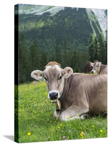 Grazing Cattle, Tyrol, Austria-Martin Zwick-Stretched Canvas Print