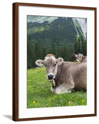 Grazing Cattle, Tyrol, Austria-Martin Zwick-Framed Art Print