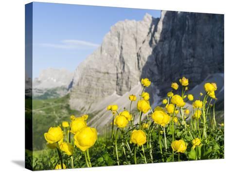 Globeflower, Karwendel Mountain Range, Austria-Martin Zwick-Stretched Canvas Print