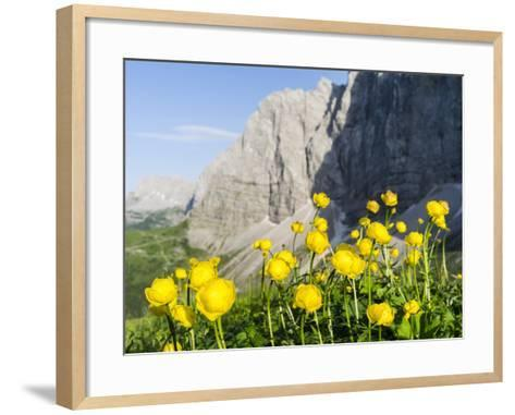 Globeflower, Karwendel Mountain Range, Austria-Martin Zwick-Framed Art Print