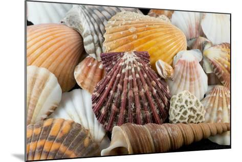 Detail of Seashells from around the World-Cindy Miller Hopkins-Mounted Photographic Print